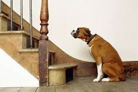 cães e escada da casa