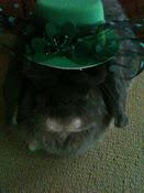 panini o'bunny