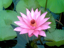 Gambar Bunga Teratai Kartun Pickini Imgurl