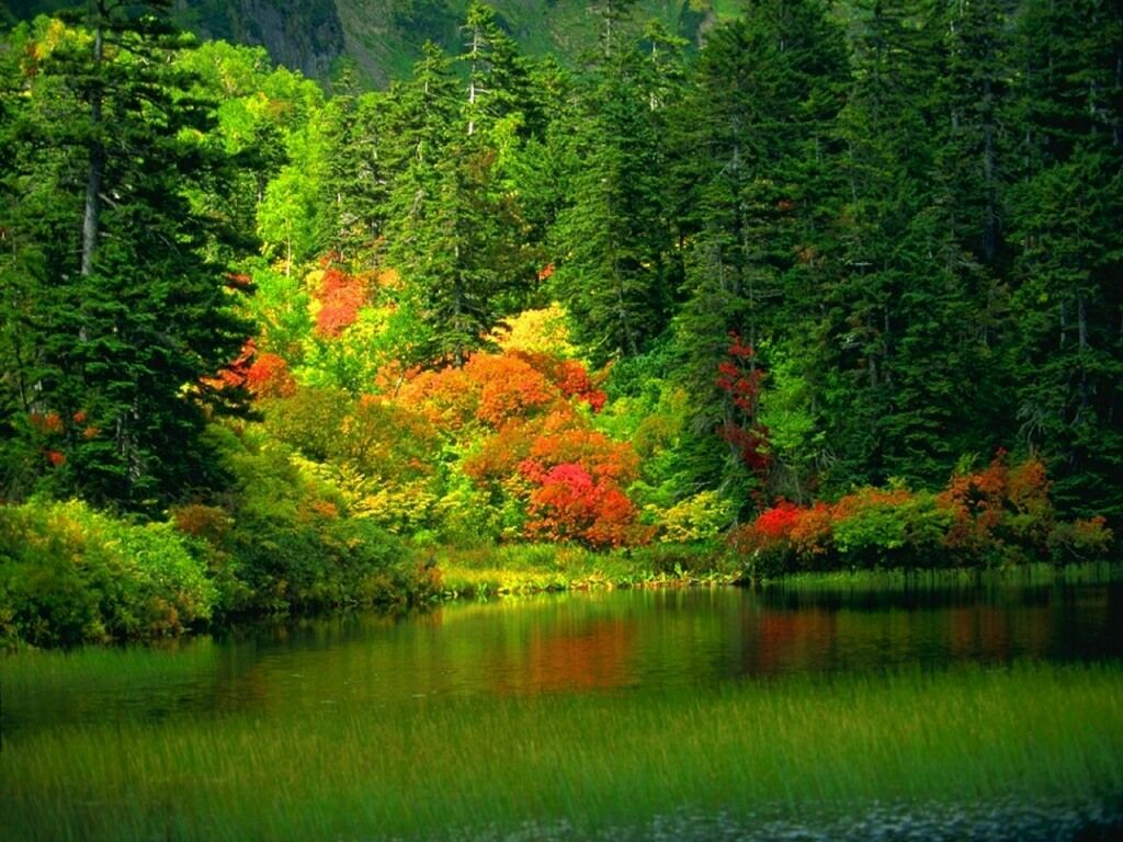 Colorful Trees Scenery Backgrounds | Scenery Backgrounds