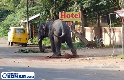 Penyek Dipijak Gajah
