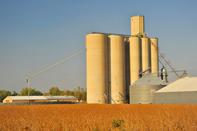 Picture of grain elevators behind a bean field