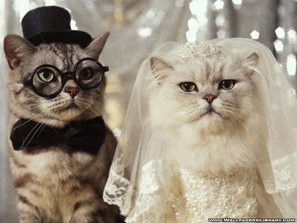 Funny Cat Wedding Cool Videos Pictures And Free