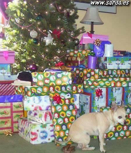 NAVIDAD, NAVIDAD, P...NAVIDAD  Navidad_regalo_perro