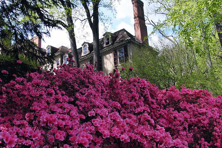 Garden center ejea azaleas especies de interior - Cuidado de azaleas en interior ...