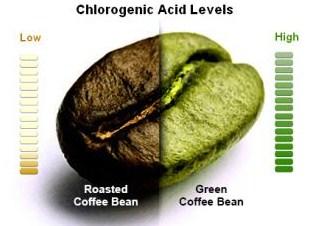 CHLOROGENIC ACID LEVELS AND COFFEE ROASTING
