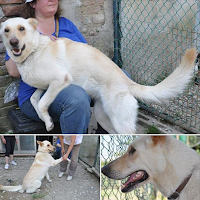 cane femmina Firenze adozione