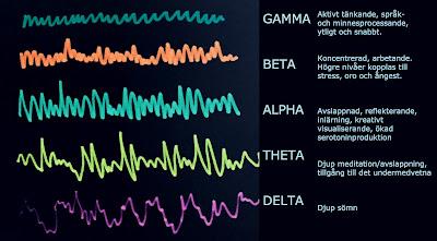 Hjärnans aktivitet i vågor