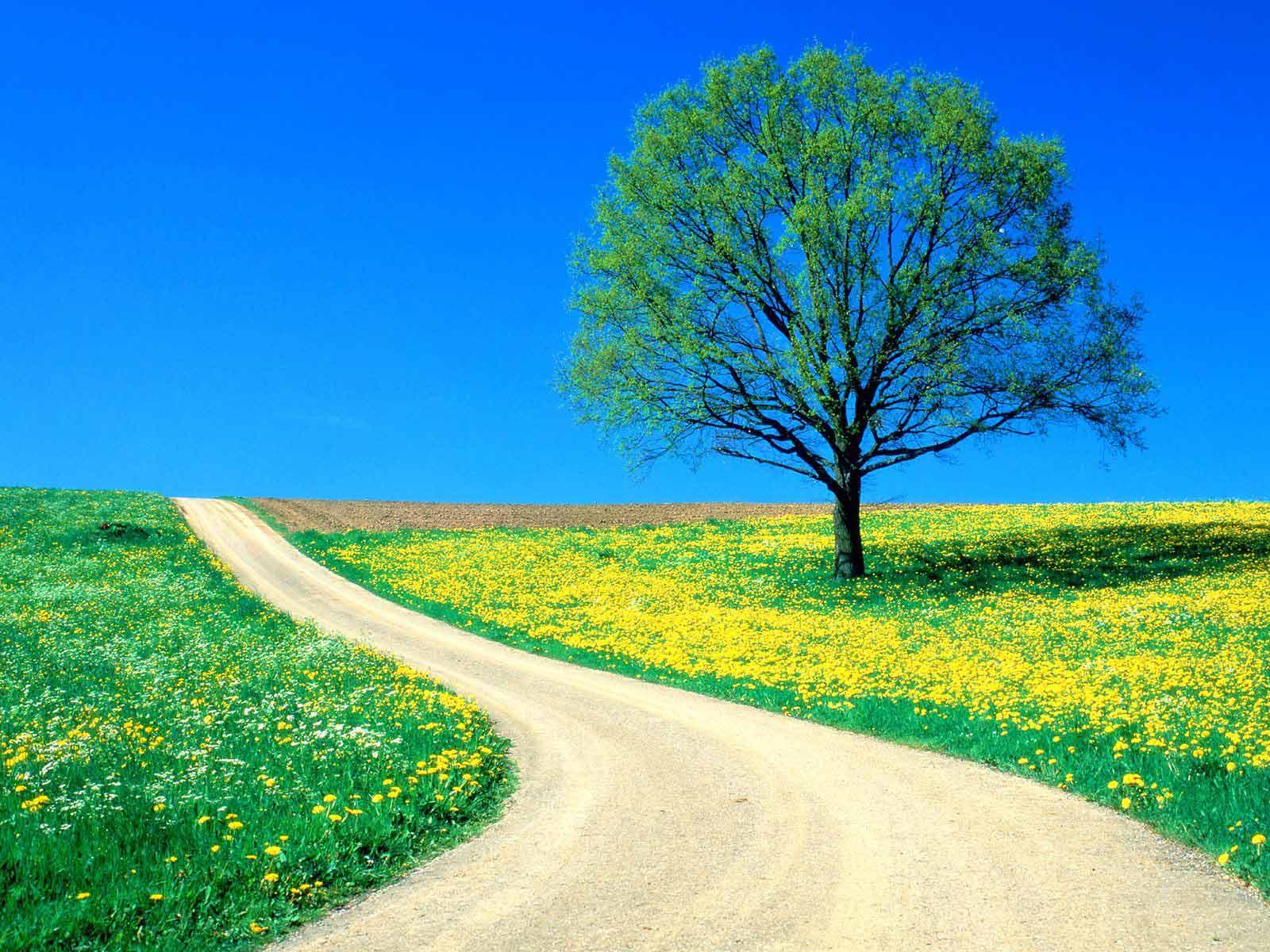 http://2.bp.blogspot.com/-oozGeZmZtEA/TeFwIwo5HDI/AAAAAAAAAF4/cBjr6_owLO4/s1600/spring_wallpapers_free_Flowers___Spring_Road.jpg