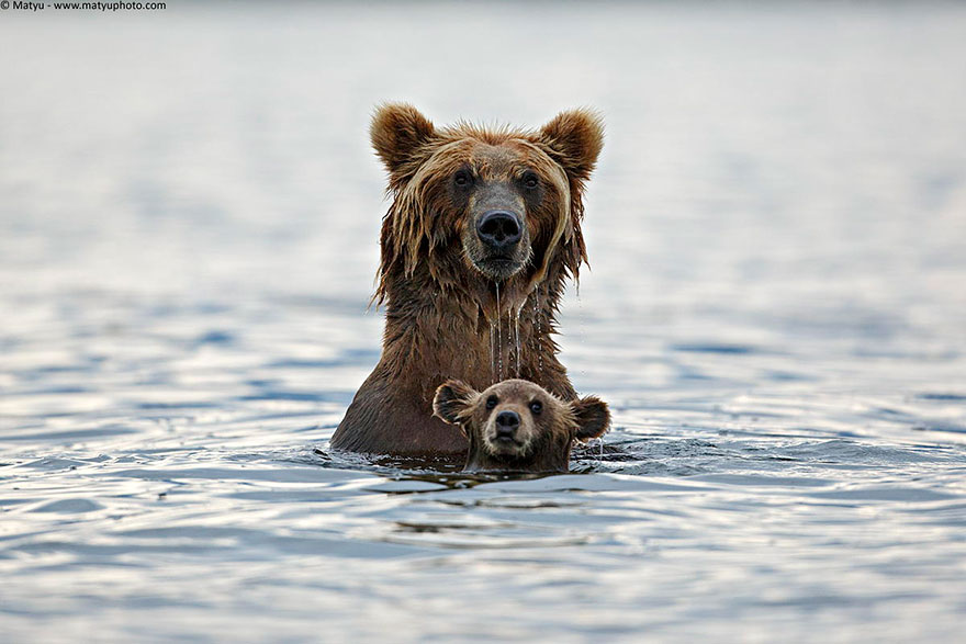 Loveisspeed Of The Cutest Parenting Moments In The - 22 adorable parenting moments in the animal kingdom