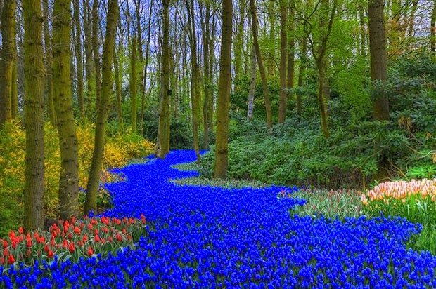World's most beautiful gardens - Keukenhof Gardens, Netherlands