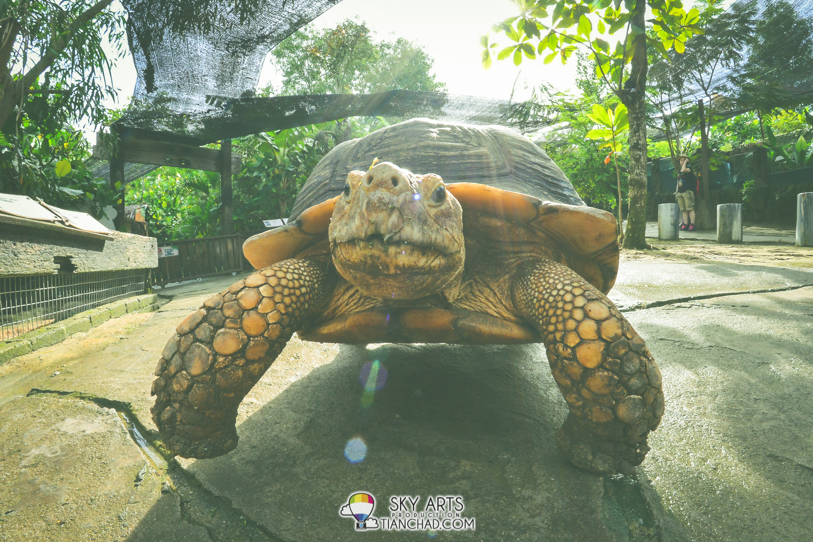15 Things To Do In Farm In The City 城の农场   Seri Kembangan
