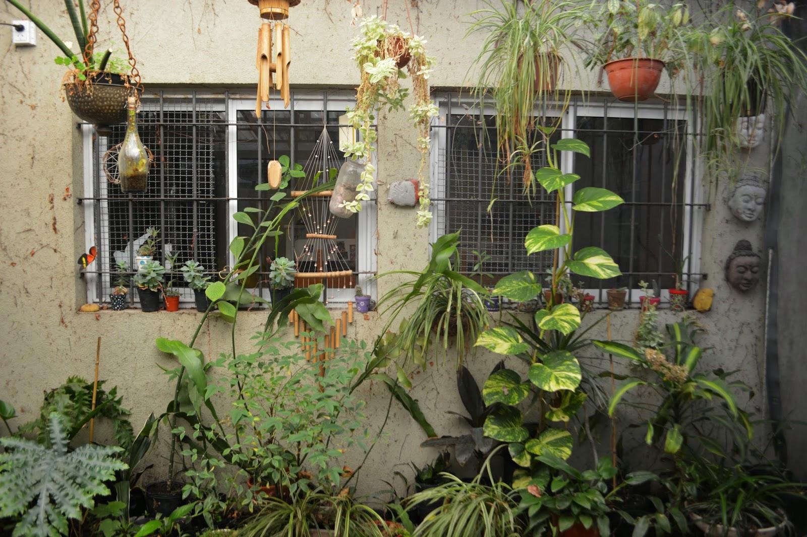 Patios urbanos peque os plantas en maceta resistentes y for Decoracion de patios pequenos con plantas