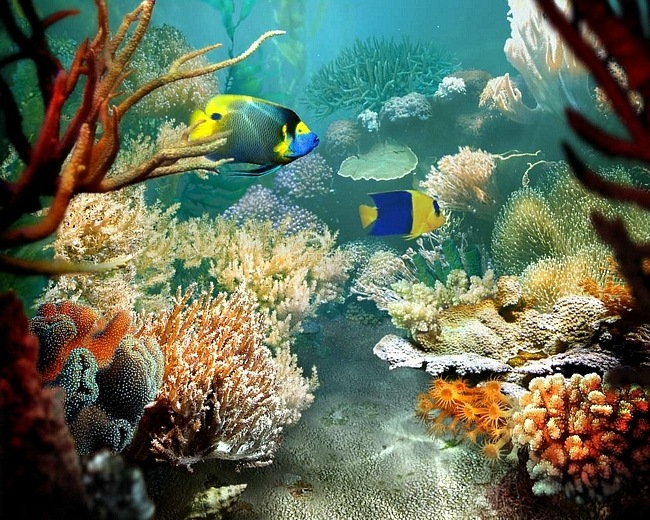 christianhdwallpaper coral reef wallpapers