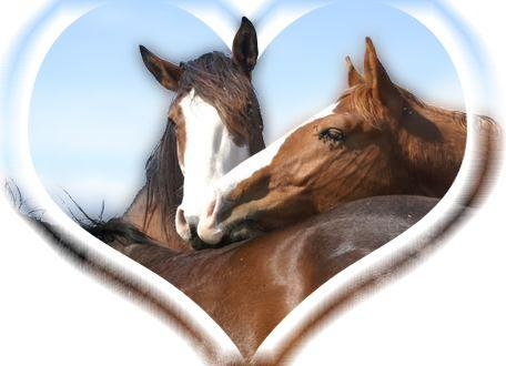 Le reiki soins energetiques pour animaux reiki healing - Image cheval a imprimer ...