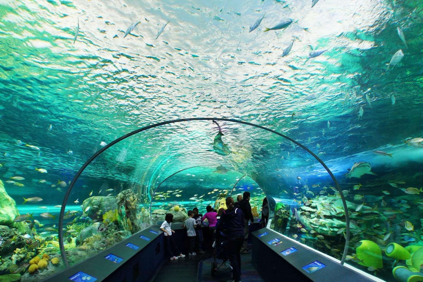 Toronto Ripley's Aquarium » Laura Clarke Photos