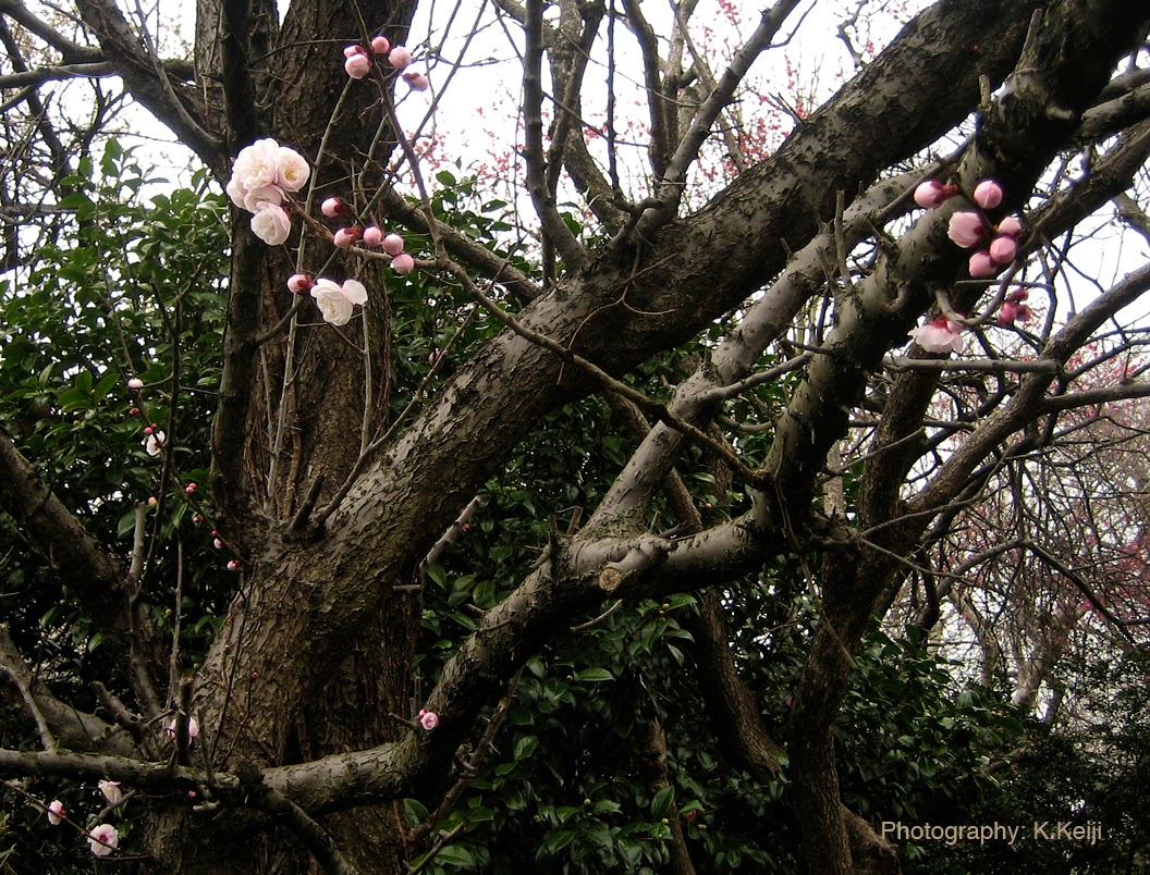 長谷川久蔵の画像 p1_31
