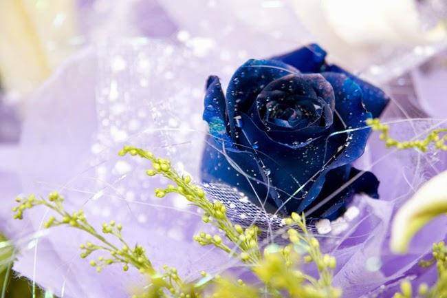 Cu o floare nu se face primavara...