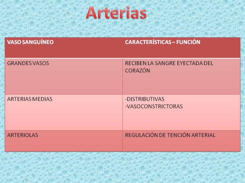 Fisiología Humana *-*: Función y clasificación de los vasos sanguíneos