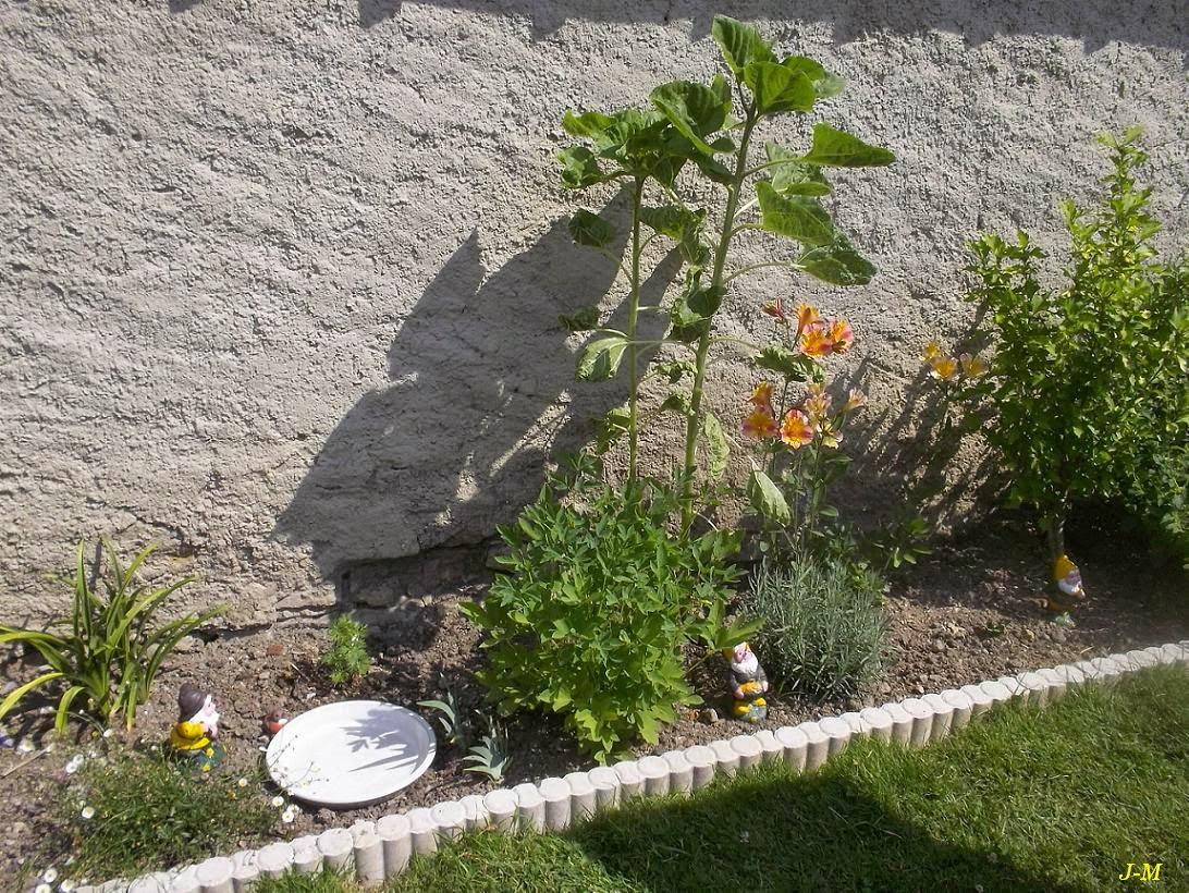 Mon jardin en moselle a cot de l 39 rig ron for Alexandre jardin mes trois zebres