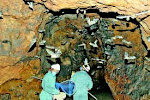 Morcegos, Cavernas e Ecossistema