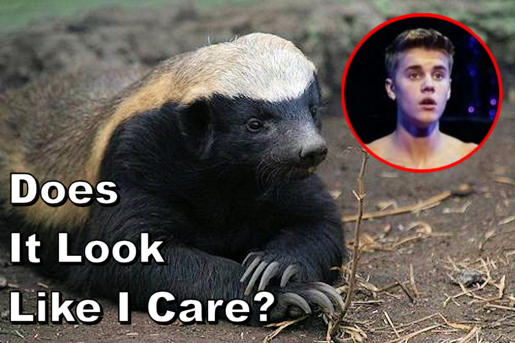 Honey Badger on Justin Bieber