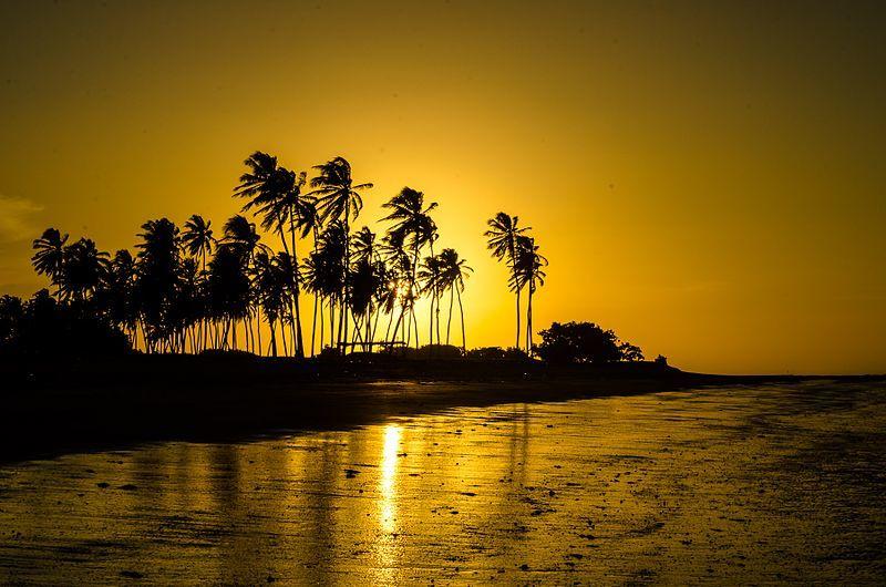 Pôr Do Sol No Cajueiro Da Praia