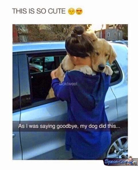 funny cute dog hug