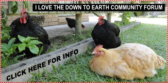 Down To Earth Community Forum