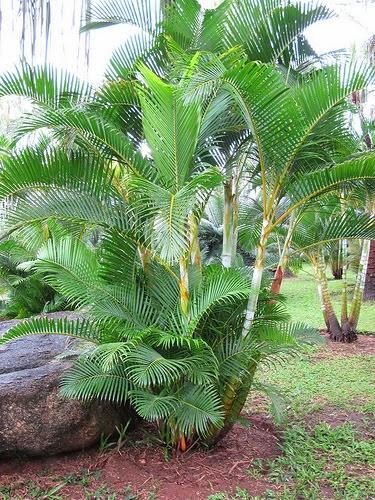 Peces y plantas ornamentales noviembre 2013 for Plantas ornamentales de exterior