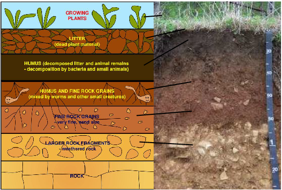 Earth learning idea make your own soil profile for What is soil