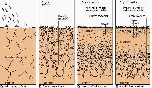 Weathering and soil for Mineral soil definition