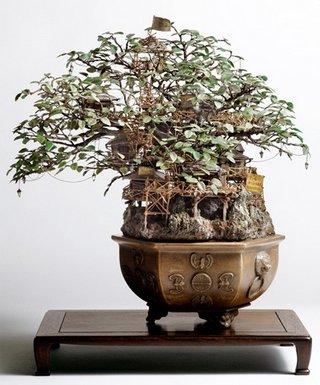 foto pohon bonsai unik
