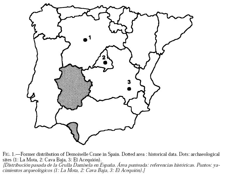 popular indio córneo en Badajoz