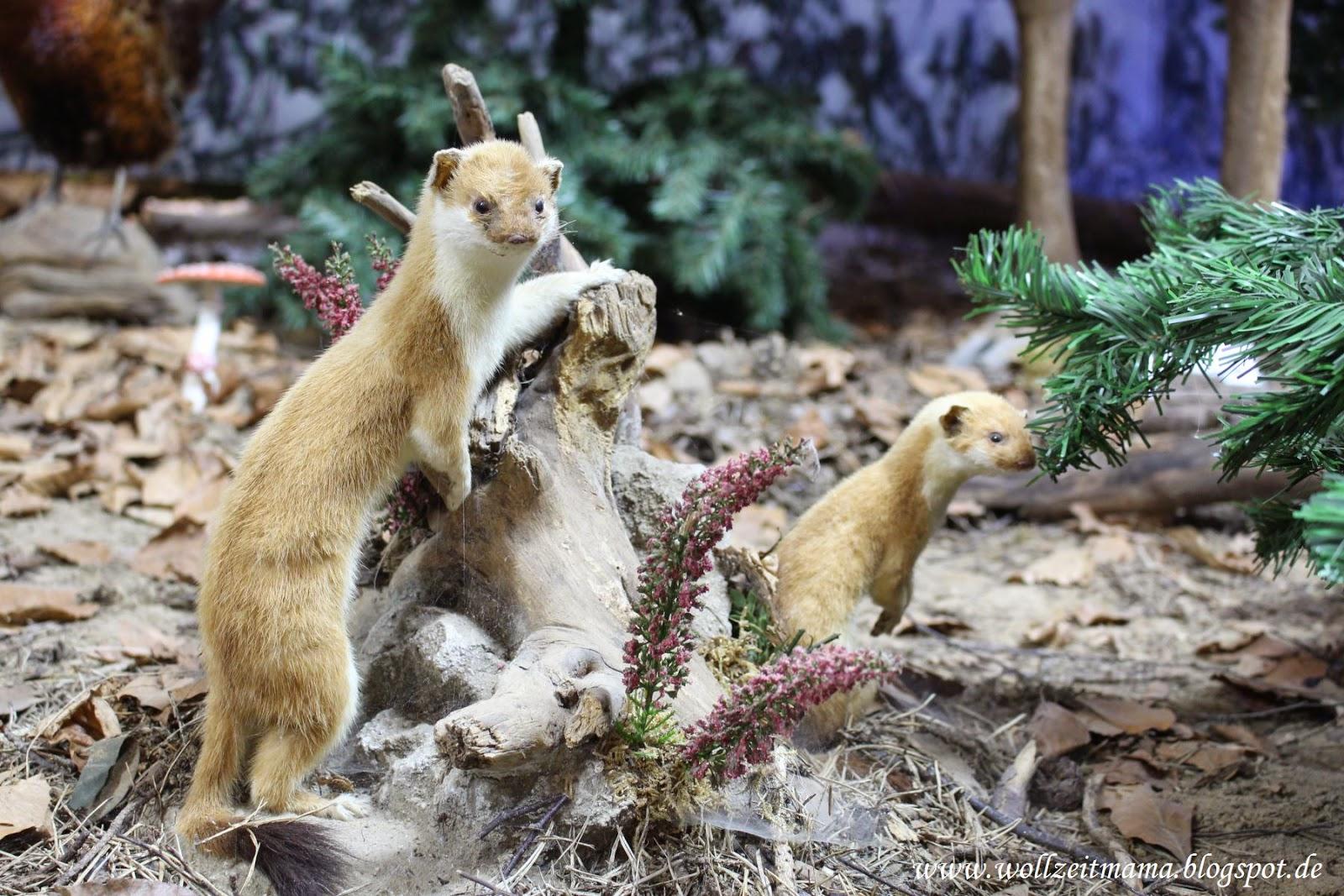 Trassenheide Wild Life Usedom