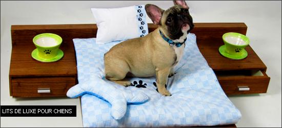 De v ritables petits lits pour les chiens woof mag for Lit qui gratte