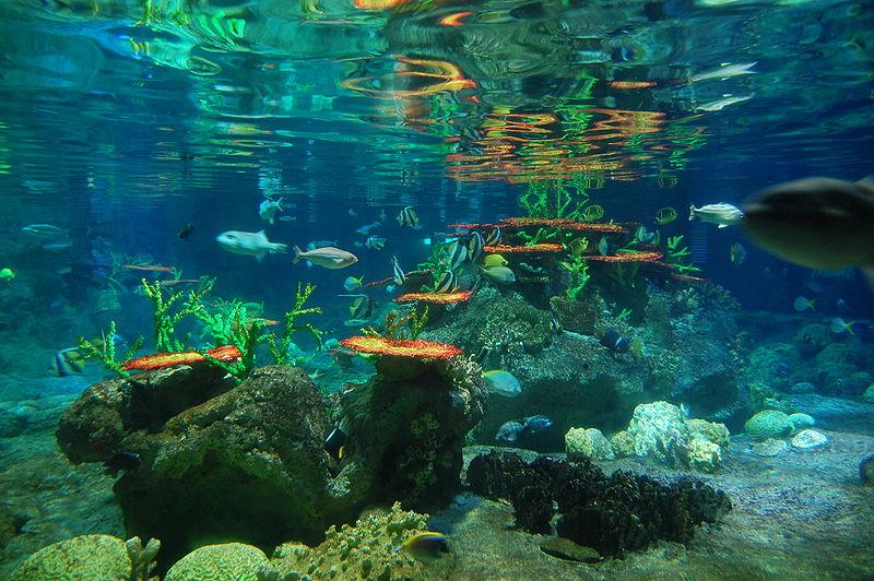 descriptive ocean essay