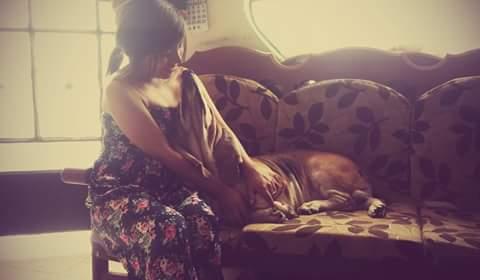 amor por los perros, mi perro murio, frases de mascotas