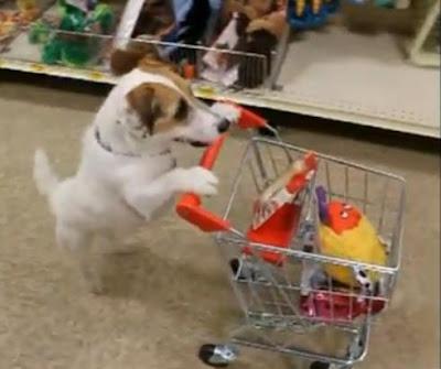 Cachorro Polivalente