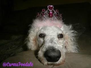 Carma in pink tiara