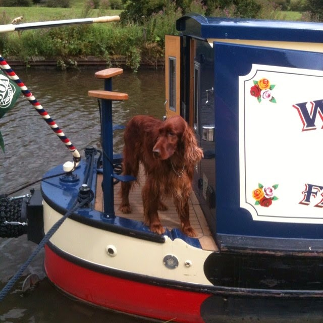 red setter on a narrow boat