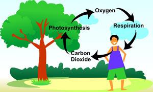 Kitar Oksigen dalam Fotosintesis : Faktor-Faktor Yang Diperlukan dan Kepentingannya