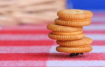 Formiga, animal mais forte do mundo