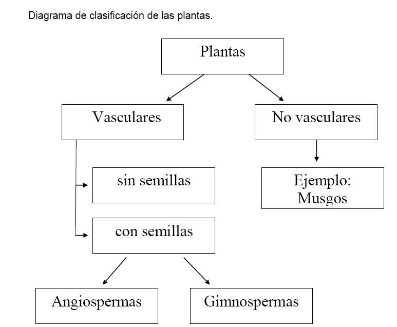 Plantas vasculares y no vasculares