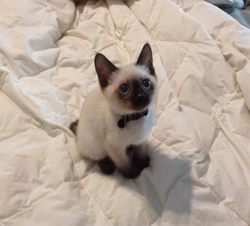 Kitten sitting on a bed looking up at the camera