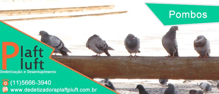 Pombos também podem transmitir doenças! - Solução - Prevenção - Dedetização - Dedetizadora Plaft Pluft - Controle de Pombos