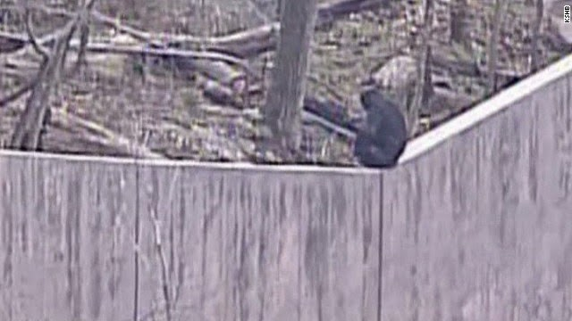 http://news.yahoo.com/clever-chimps-kansas-city-zoo-brief-break-freedom-045412825.html?vp=1
