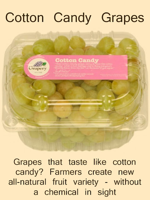 Grapes that taste like cotton candy? Farmers create new all-natural fruit variety - without a chemical in sight