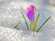 Весна вернулась!