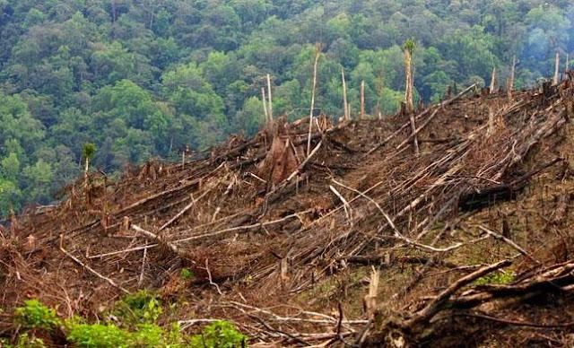 Laju Kerusakan Hutan Indonesia Terparah Setelah Brasil